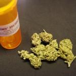 NC Voters Support Medical Marijuana